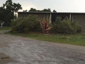 The Tree on the side of the Family Life Center was destroyed today by lightning.